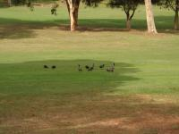 17th April 2013 on 16th Fairway,.jpg
